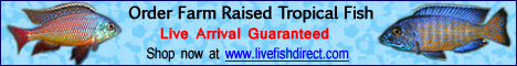 Buy Live Tropical Fish at Live Fish Direct. Live arrival guaranteed!